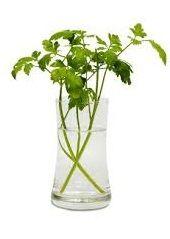 planta con vitamina K