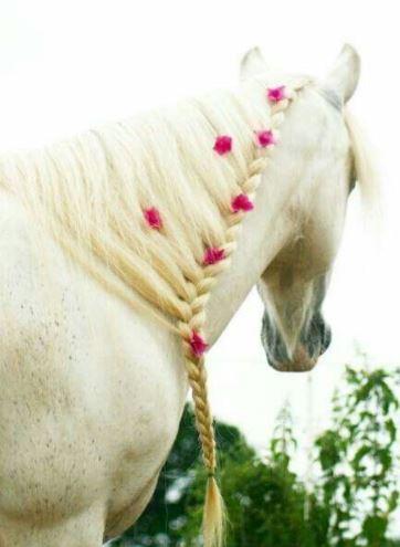 Trenzas románticas caballo